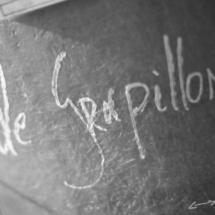 Grapillon